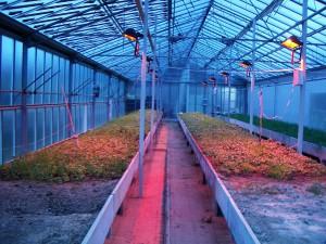 vytápění skleníků elektrické zářiče